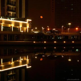 Last night I captured this beautiful red blooded  moon while going on a stroll. I could not resist myself looking at this beauty and the way it reflected in the lake…   Nature can be so amazing at times, all we need to have an open eyes to look at the beauty.   {Insta Editing- just increased contrast, warmth and sharpness. }  #viewfromjlt #redmoon #fullmoonvibes #shotoniphone #naturelover #photomania #moonphotography #pleasantview #contentcreator #opticalillusion #mudubai #lovingdubai #thevibrantbirdie #dubaiblogger #bloggersofinstagram #mamablogger #creativeoptic #newblogpost #natureshots #naturelover #bestview #foryou #fyp #explorepage #igpost
